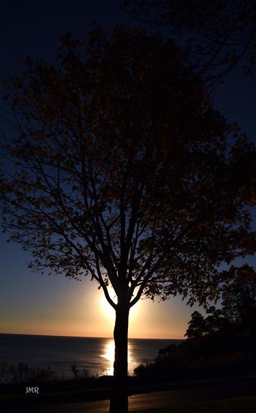 SUN TREE _9622.jpg