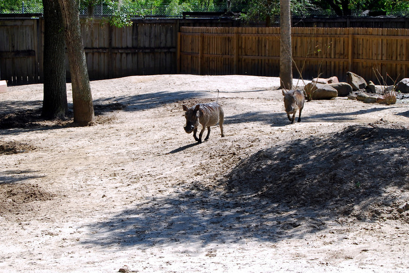 2014 Zoo in Sanford, Florida (22).JPG