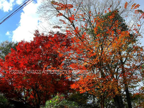 Fall in Atlanta 2009