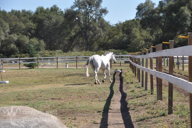 EB&Horses-075.jpg