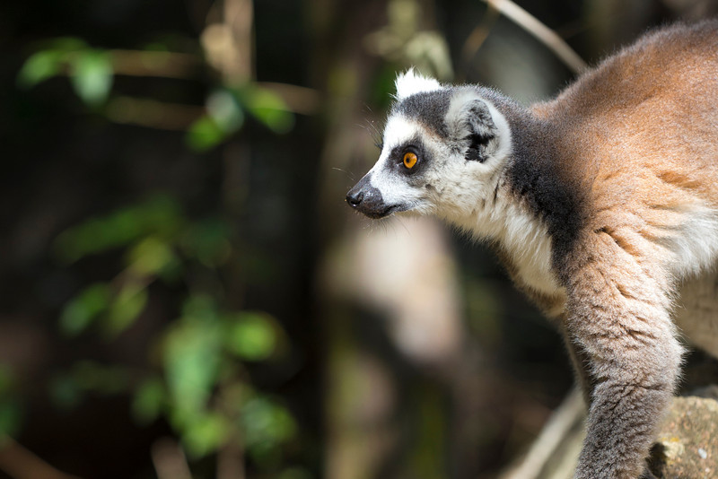 Madagascar_2013_FH0T1374.jpg