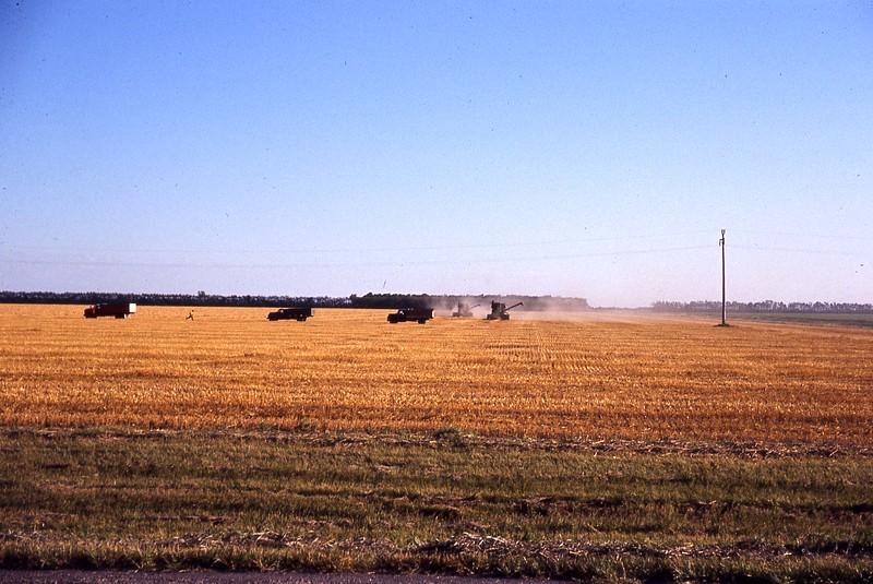ARS052.  Grain trucks in field - 1950‡.jpg