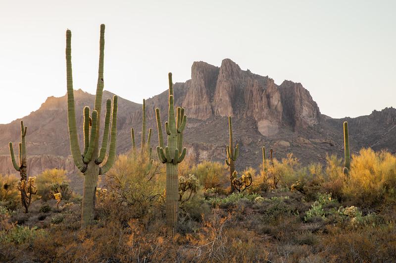 WVWS_Saguaro Cactus-3827.jpg