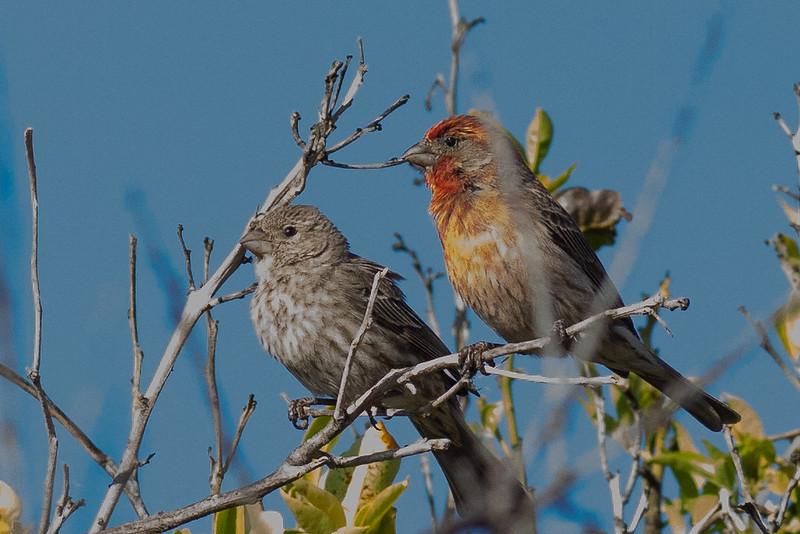 2birds-0014.jpg