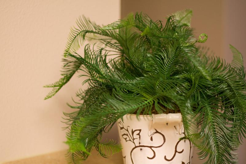 JT's Plant