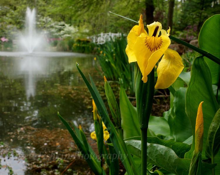 fountain flower.jpg