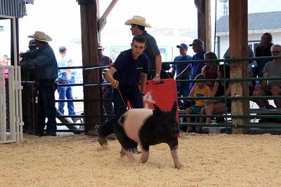 Feeder Swine Class 2