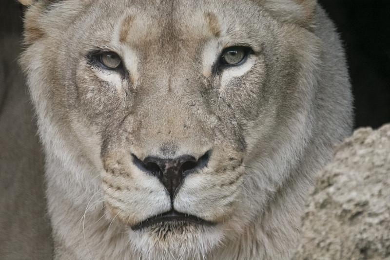 Wildlife-14.jpg