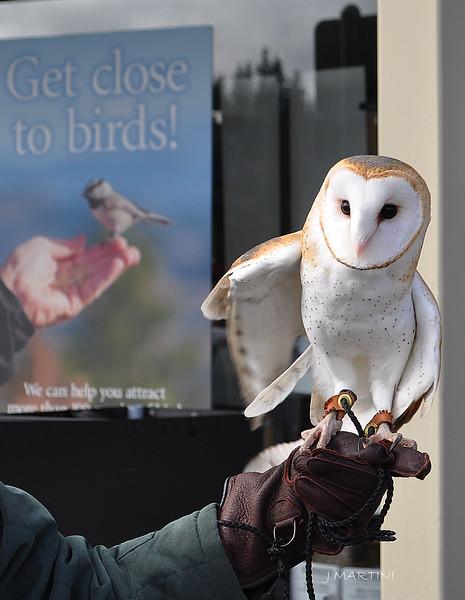 GET CLOSE TO BIRDS 2 12-14-2014.psd