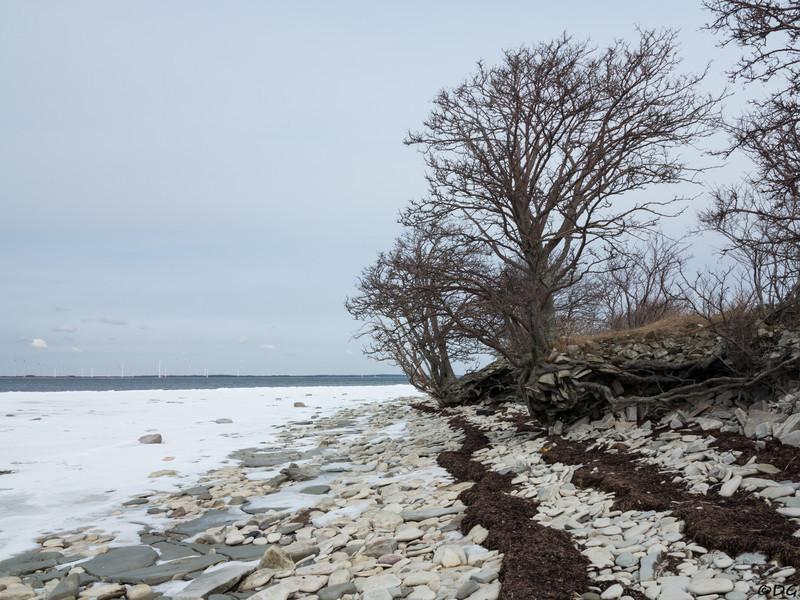Sweden, Gotland, Vamligbo