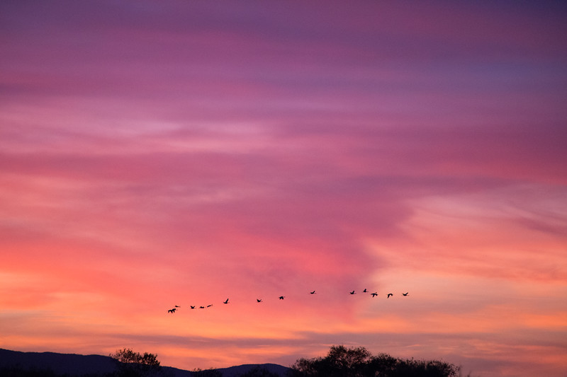 late birds at sunset.jpg
