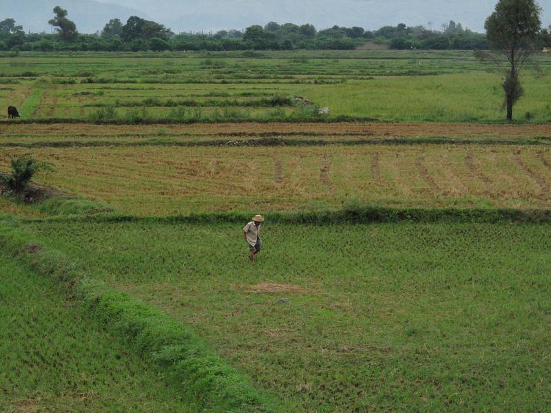 Peruvian Farm Worker