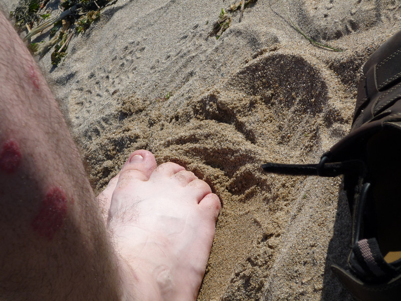 Calf Pasture Beach (15).JPG