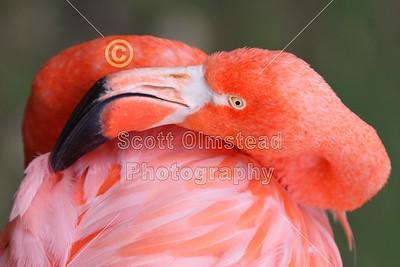2011 Columbus Zoo (09-16-11)