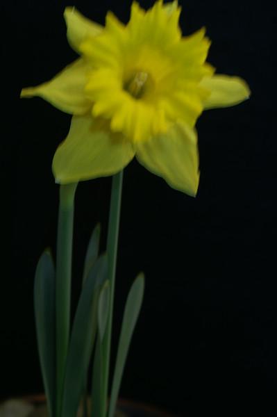 Yel Flower09.jpg