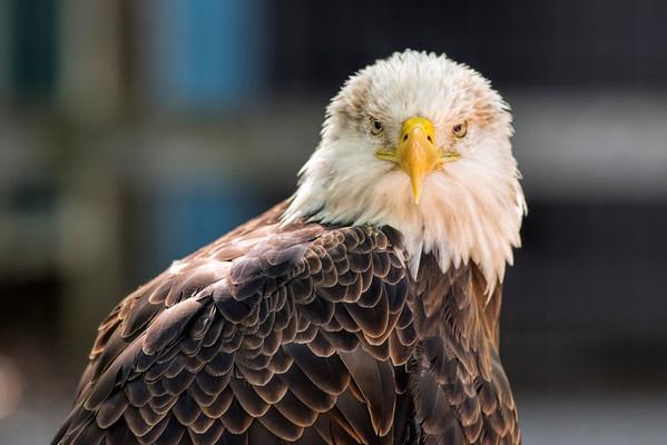 World Bird Sanctuary Valley Park, Mo