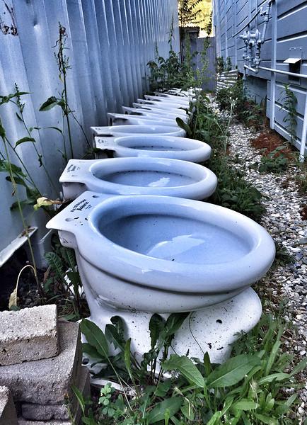 Toilet heaven.jpg