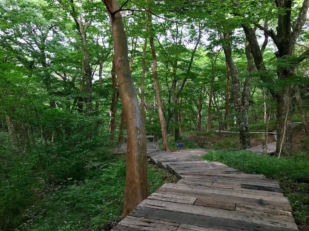 Walking through the beech forest surrounding the museum.