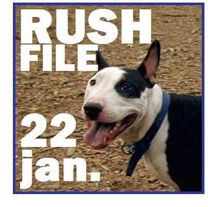 22 JAN. (rush file)