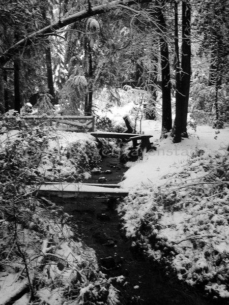 Twain Harte in Winter