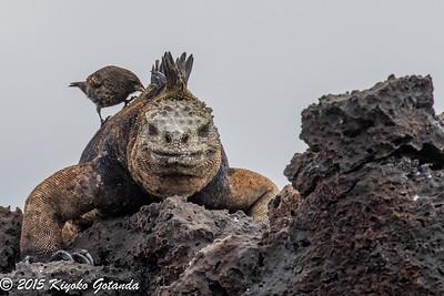 Galápagos Islands 2015