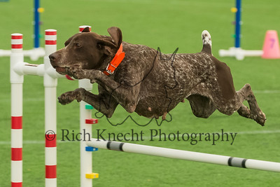 GSPCA National Specialty AKC Agility Trial May 5