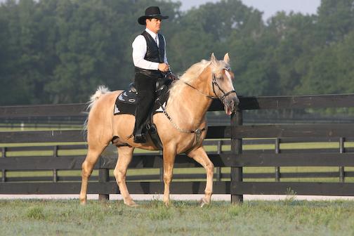 Ivory Pal Under Saddle 2008