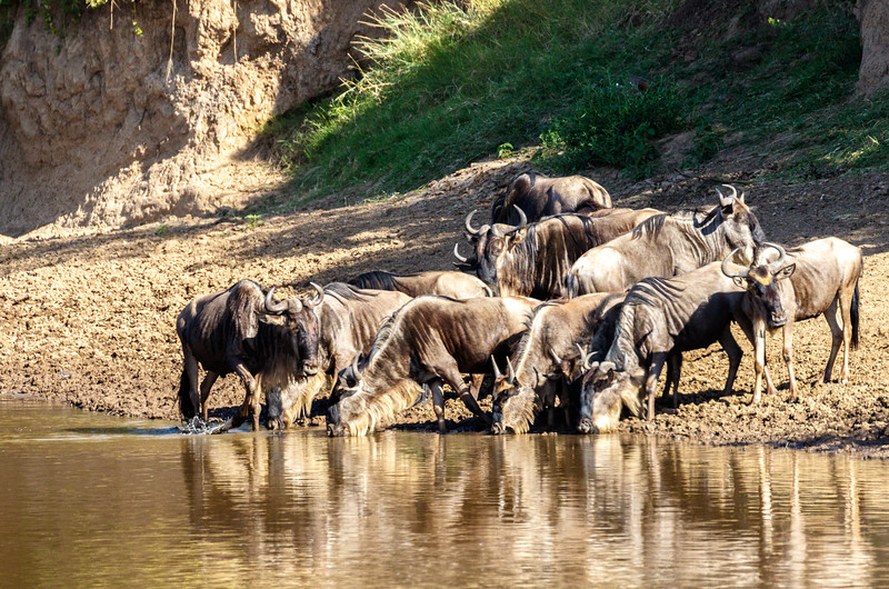 Kenya 2015-02805.jpg