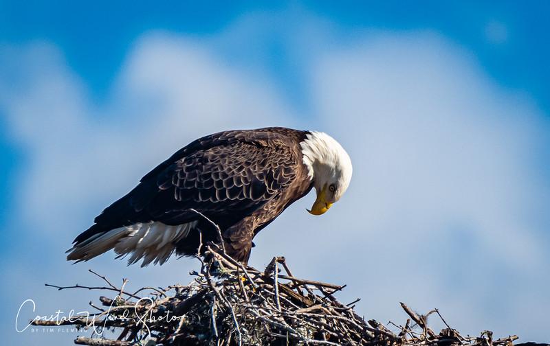 Bald Eagle Causeway 4 121120-.jpg