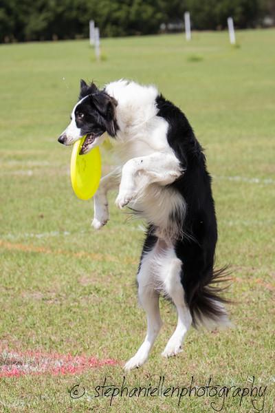 _MG_2827Up_dog_International_2016_StephaniellenPhotography.jpg