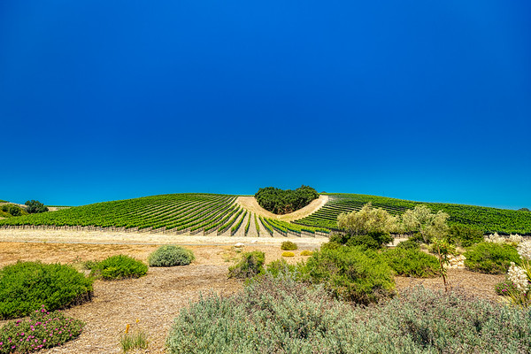 Niner Winery Paso Robles, Ca