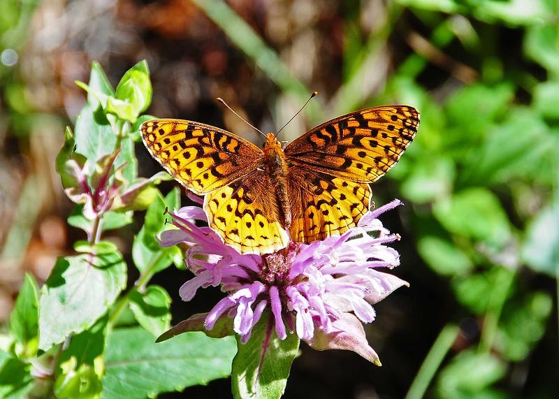 NEA_5673-7x5-Butterfly.jpg