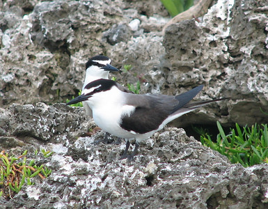 various pelagic and waterbird photos