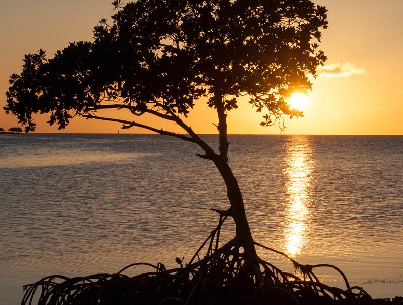 grassy key mangrove-2-2.jpg