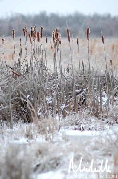 Snow1-29-10-011.jpg