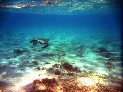 Hawaii 2011 - P+S