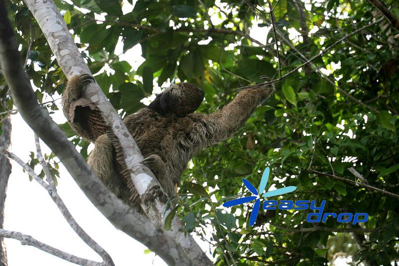 Preguica-Eng-20090905-1.JPG