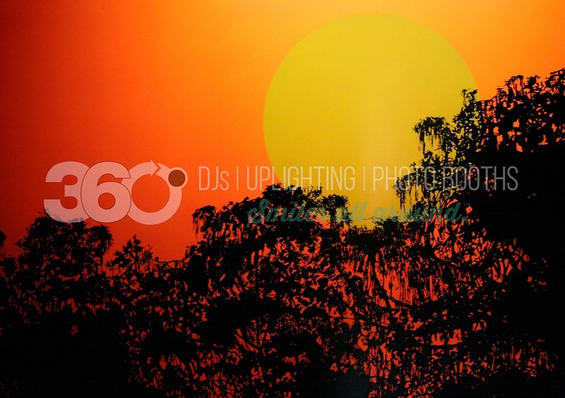 Neon Sunset_batch_batch.jpg