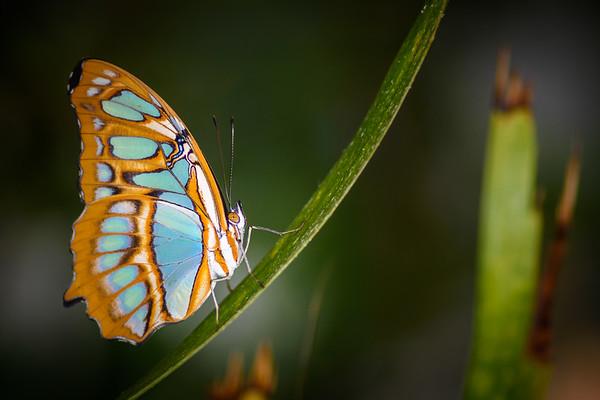 art of wings
