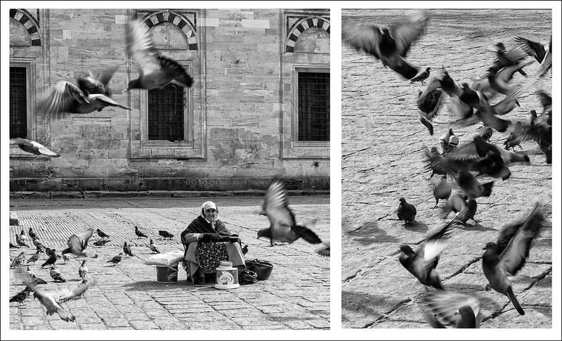 Birds_Istanbul.jpg