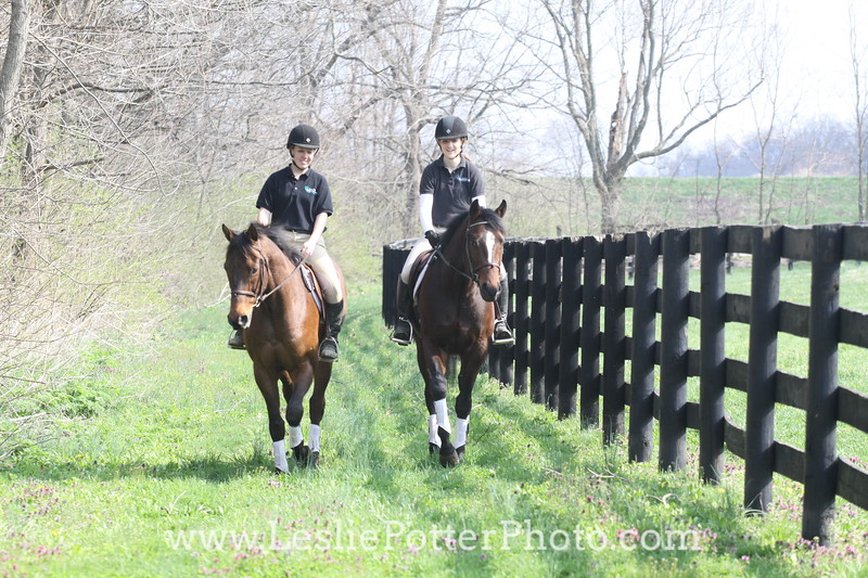 Schooling and Trail Riding