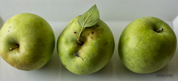 Transparent Apples - ripens in late June to mid-July