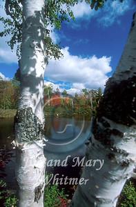 Trees_020