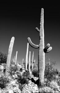 Places - Saguaro Ntl Monument