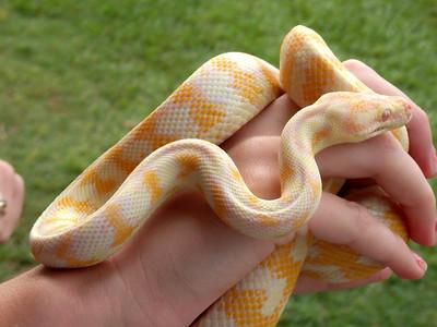 Snakes on a Kindergarten