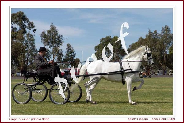 Penola Show Horse Events