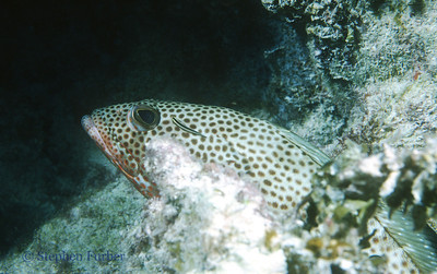 Reef Fish - Macro