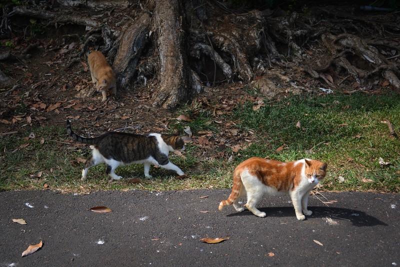 animals - 40.jpg