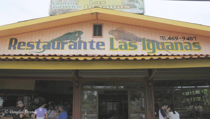 AlongTheWay: iguana souvenirs sold here