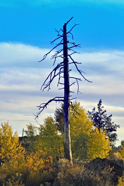Dead Tree 09-005.jpg